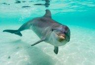 58fbc-delfin