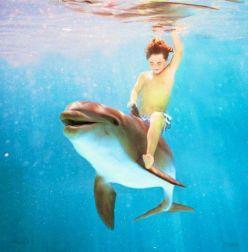 vis cu delfin