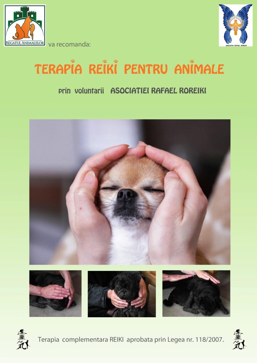 Regatul Animalelor, prima clinica veterinara din Romania ce recomanda terapia reiki pentru animale oferita de voluntarii  Asociatiei Rafael Roreiki