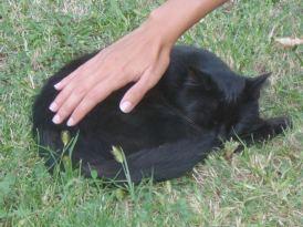Cursuri Reiki pentru oameni & animale