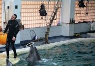 Delfinii au adus zambete